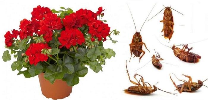 Цветок от тараканов
