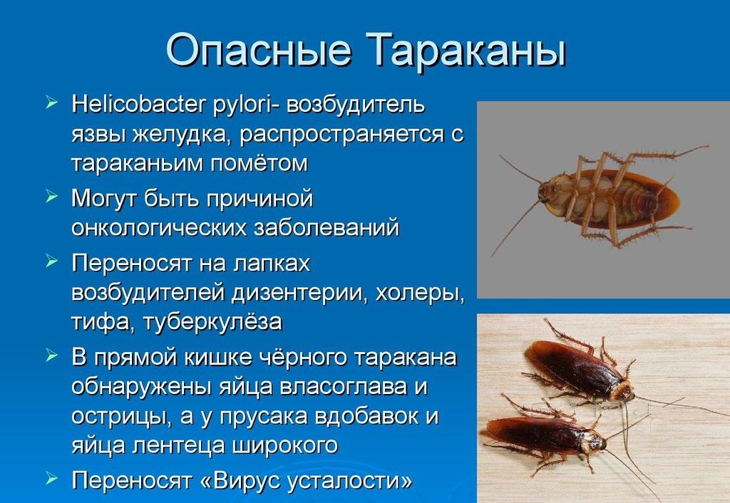 Вред тараканов